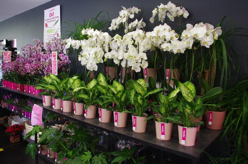Fleuriste Bondues Openflor 2