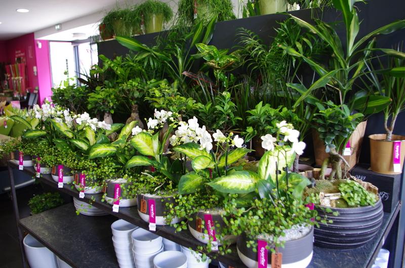 fleuriste Bondues Openflor 1