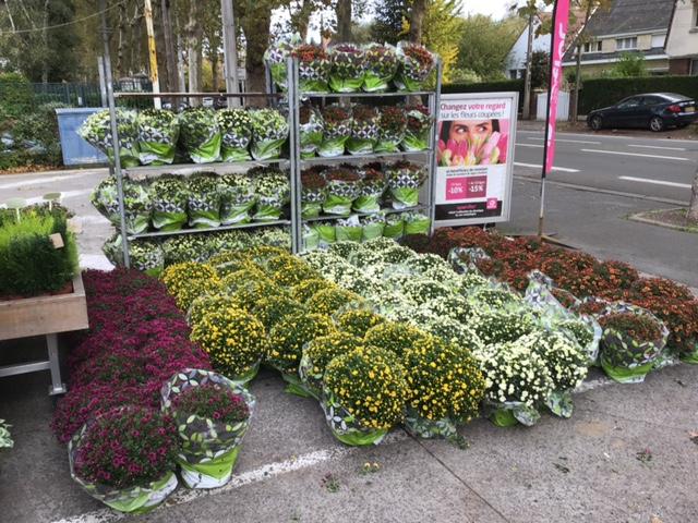 Fleuriste Lambersart Openflor (2)