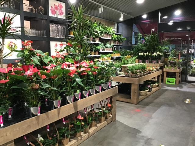 Fleuriste Lambersart Openflor (3)